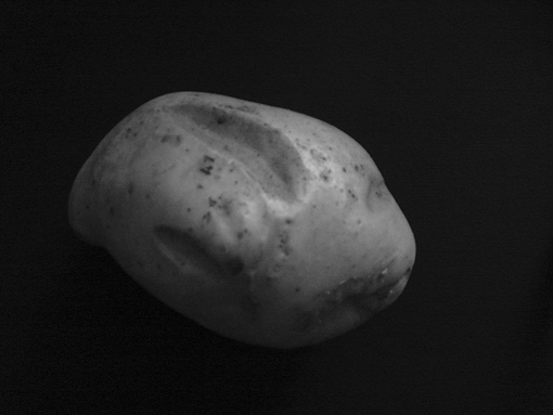 The potato model of the asteroid used in the classroom